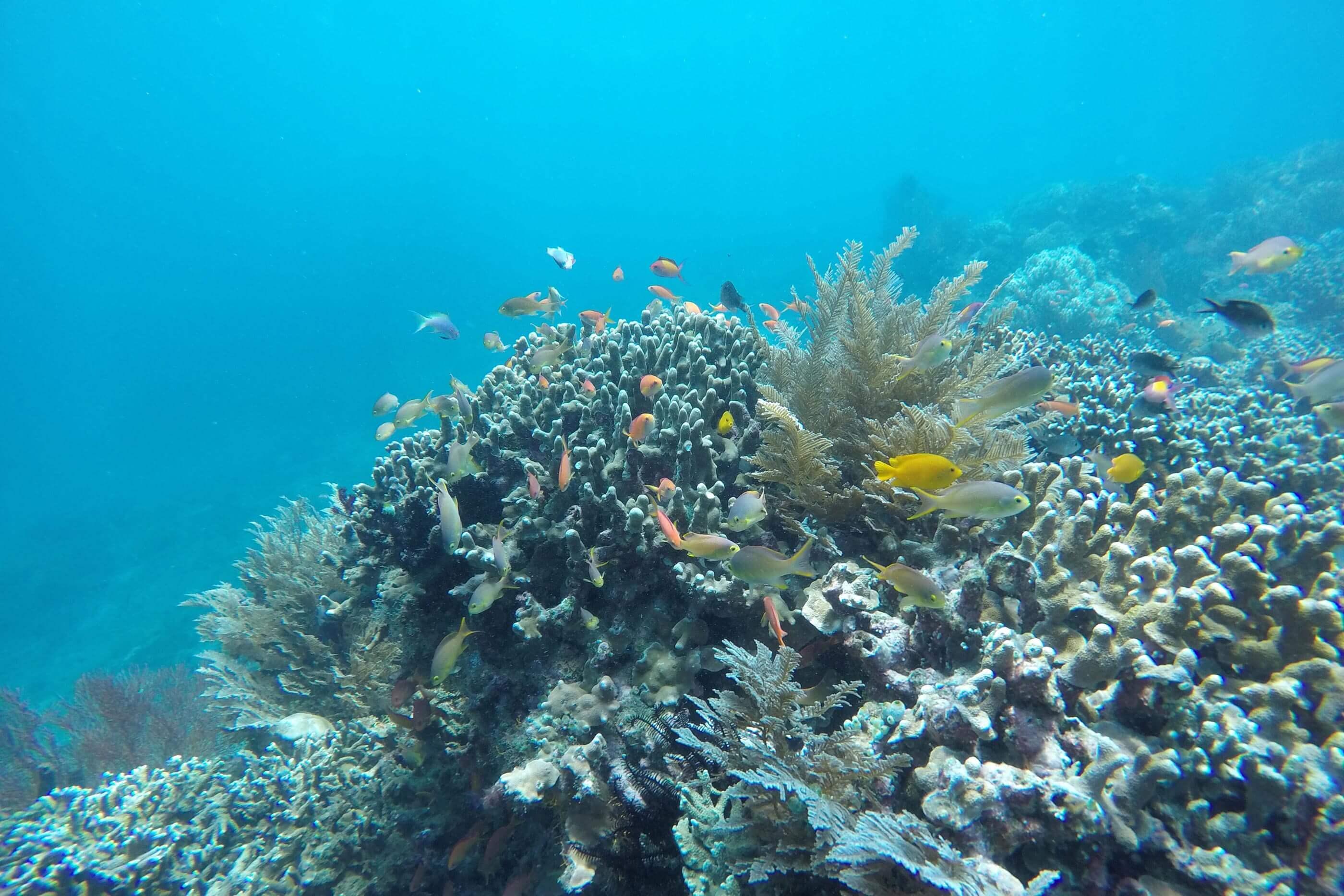 YVONNE RUNDIO BIRU BIRU Bali Tauchen